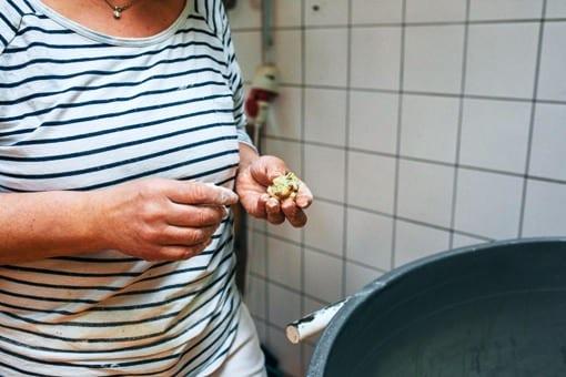 Tomaten Mozarella Nudeln